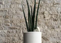 Bacularis in Vase