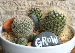 Cactus Garden in Bowl