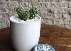 cactus in mini cup