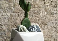 Cactus in Geometric Planter