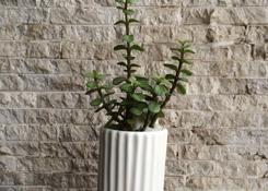 Jadelet in Vase
