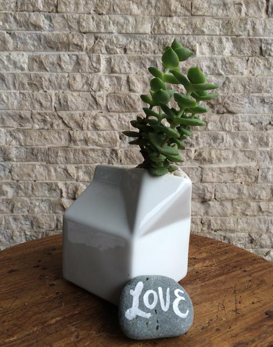 succulent in milk carton