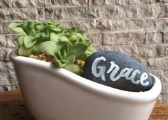 Succulent Tub Garden